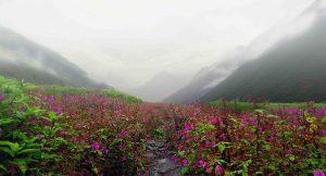 Valley of Flowers Uttara khand BanBanjara